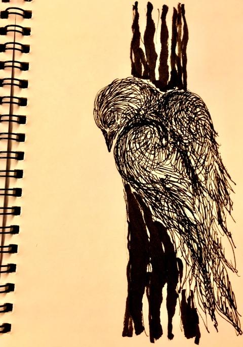 oiseau-noir-par-kajanc